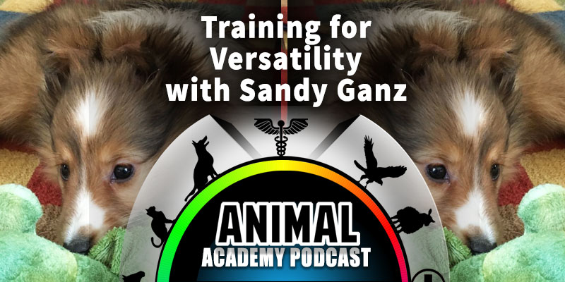 Animal Academy Podcast: Training for Versatility with Sandy Ganz
