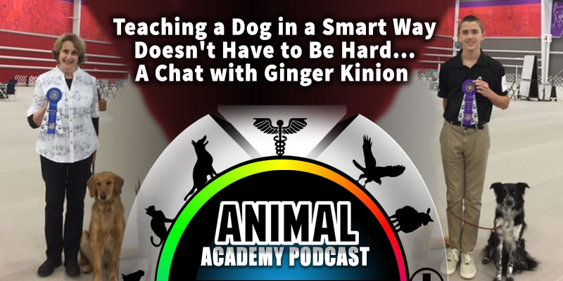 The Animal Academy Podcast: Teaching a Dog in a Smart Way Doesn't Have to Be Hard...