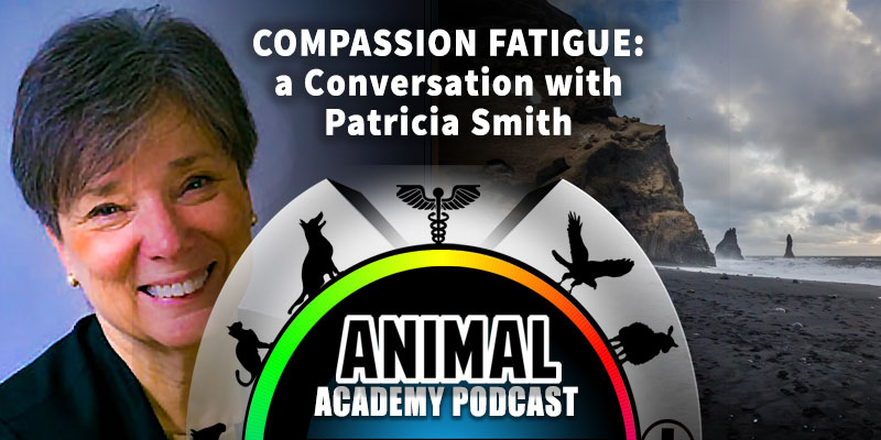 Animal Academy Podcast: Compassion Fatigue: A Conversation with Patricia Smith